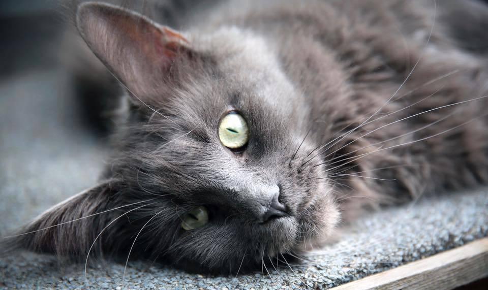 espace presse le jardin des chats h tel pour chat montpellier n mes et marseille. Black Bedroom Furniture Sets. Home Design Ideas